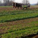 Flying Plow Farm, Rising Sun