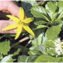 INVASIVE PLANTS TAKING OVER STATE