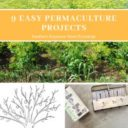 Easy Permaculture Practices