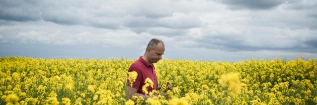 Good News: GMOs Don't Work!